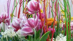 Bouquet of garden flowers in Keukenhof. Stock Footage