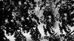 trees in the wind - stock footage