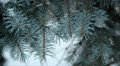 Winter forest in snow 8 HD Footage