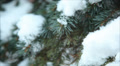 Winter forest in snow 4 HD Footage