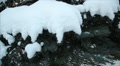 Winter forest in snow 3 Footage