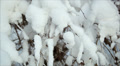 Winter forest in snow 2 Footage