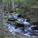 Small creek Stock Photos