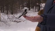 Stock Video Footage of Feeding birds by hand. #14B Real Time