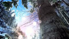 Snow winter. trees woods forest. snow trees. snow falling Stock Footage