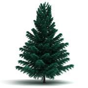 single spruce pine tree - stock illustration
