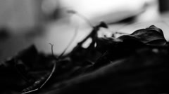 Close up leaves, foreground and background focus Stock Footage