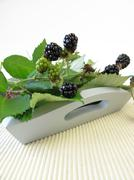 Still life with wild blackberries - stock photo