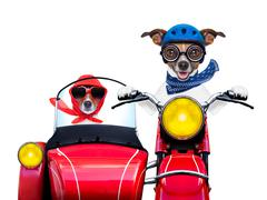 motorbike dogs - stock illustration