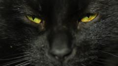 Black Cat Eyes Squinting HD Stock Footage