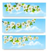 three spring banners with blossoming tree brunch with spring flowers. vector  - stock illustration