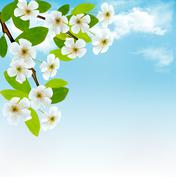 nature background with blossoming tree brunch and blue sky. vector illustrati - stock illustration