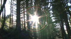 Traveling Through Sun Lit Forest Stock Footage