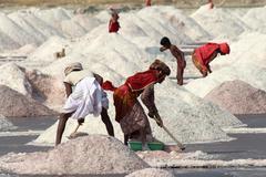 salt mining on sambhar lake in india - stock photo