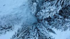Winter trees. snow trees. forest nature. aerial view. fly over Stock Footage
