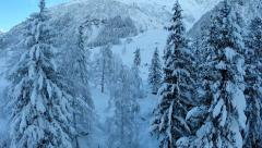 Beautiful winter forest. snow trees. flying trough. aerial view Stock Footage