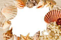 White blank space for inscriptions surrounded by shells Stock Photos