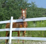 Stock Photo of horse behind white fence