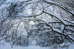snow on the trees and bushes in winter forest - stock photo