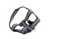 studio shot of colorful dog restraining harness - stock photo