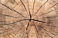 Stock Photo of closeup of the rings of a newly cut tree