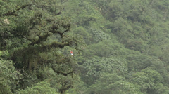 Camera tracks a young men on the zip line over 300m of cable Stock Footage