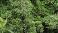 Stock Video Footage of Rainforest zipline HD