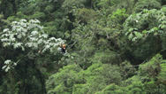 Stock Video Footage of Couple on zipline HD