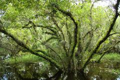 Tree in swamp in everglades Stock Photos