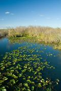florida everglades - stock photo