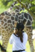 Woman photographing of a giraffe Stock Photos