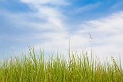 Green grass and blue sky with clouds.. Stock Photos