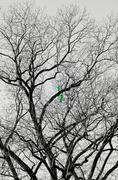 balloon on a bare tree - stock photo