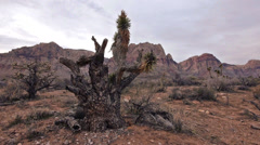 Red rocks desert wilderness flora 6 Stock Footage