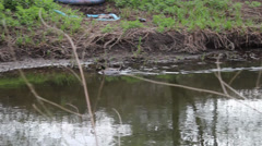 Following duck down river Stock Footage