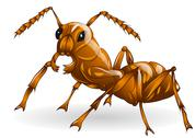 Stock Illustration of ant