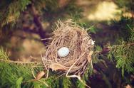 Stock Photo of one egg in a bird nest