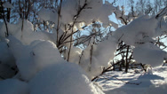 Set of dry stems covered with thick snow Stock Footage