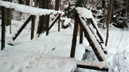 White labrador crossing wooden bridge Stock Footage