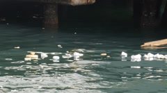 FLOATING GARBAGE - floating cups of coffee garbage in harbor Stock Footage