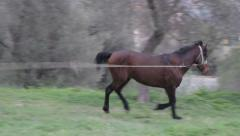Stallion angry neighing and running Stock Footage
