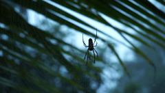 Spider Moving On Its Web Inside Malaysian Tropical Forest Stock Footage