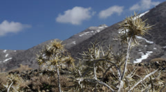 Thistle wind mountain blue sky clouds Stock Footage