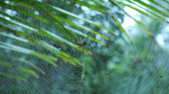 Spider Crawling On Web In Malaysia Tropical Forest Stock Footage