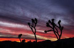 Joshua tree sunset Stock Photos