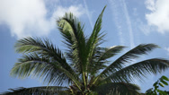 Stock Video Footage of Coconut Tree Leaves Swaying Under Bright Blue Sky