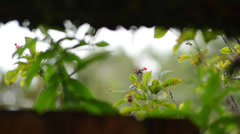 calmed green vegetation with butterfly viewed from interior - stock footage
