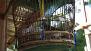 Stock Video Footage of Bird In A Beautiful And Classic Bamboo Cage