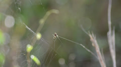spider web building on the center of composition - stock footage