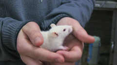 White mouse Stock Footage